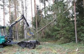 Alajarvi_energiapuu_002_140