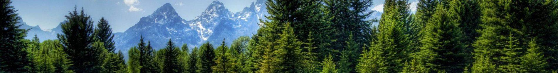 Tag: Metsa eluring