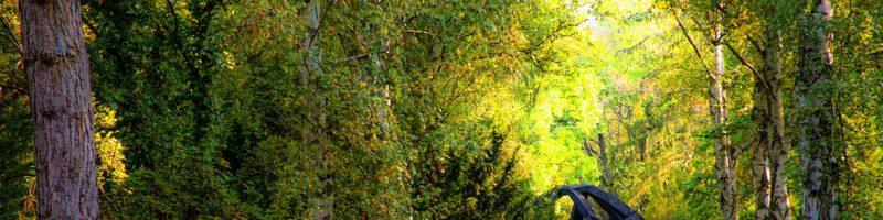 Metsandus ja metsamajandus