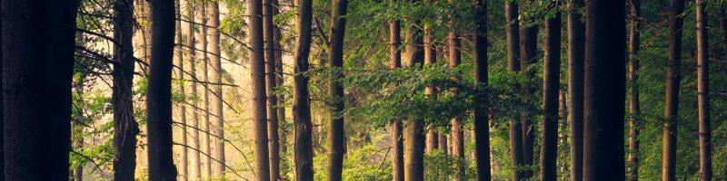 Eesti majandus ja seda mõjutavad tegurid või sündmused