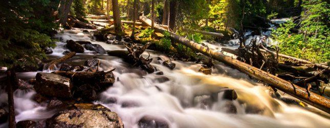 Metsa eluring – Metsaparandus