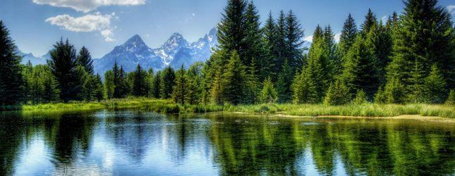 Mets on kooslus, kus puud määravad üksteise ja teiste organismide elutingimusi