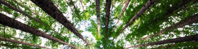 Eesti metsad ja metsandus
